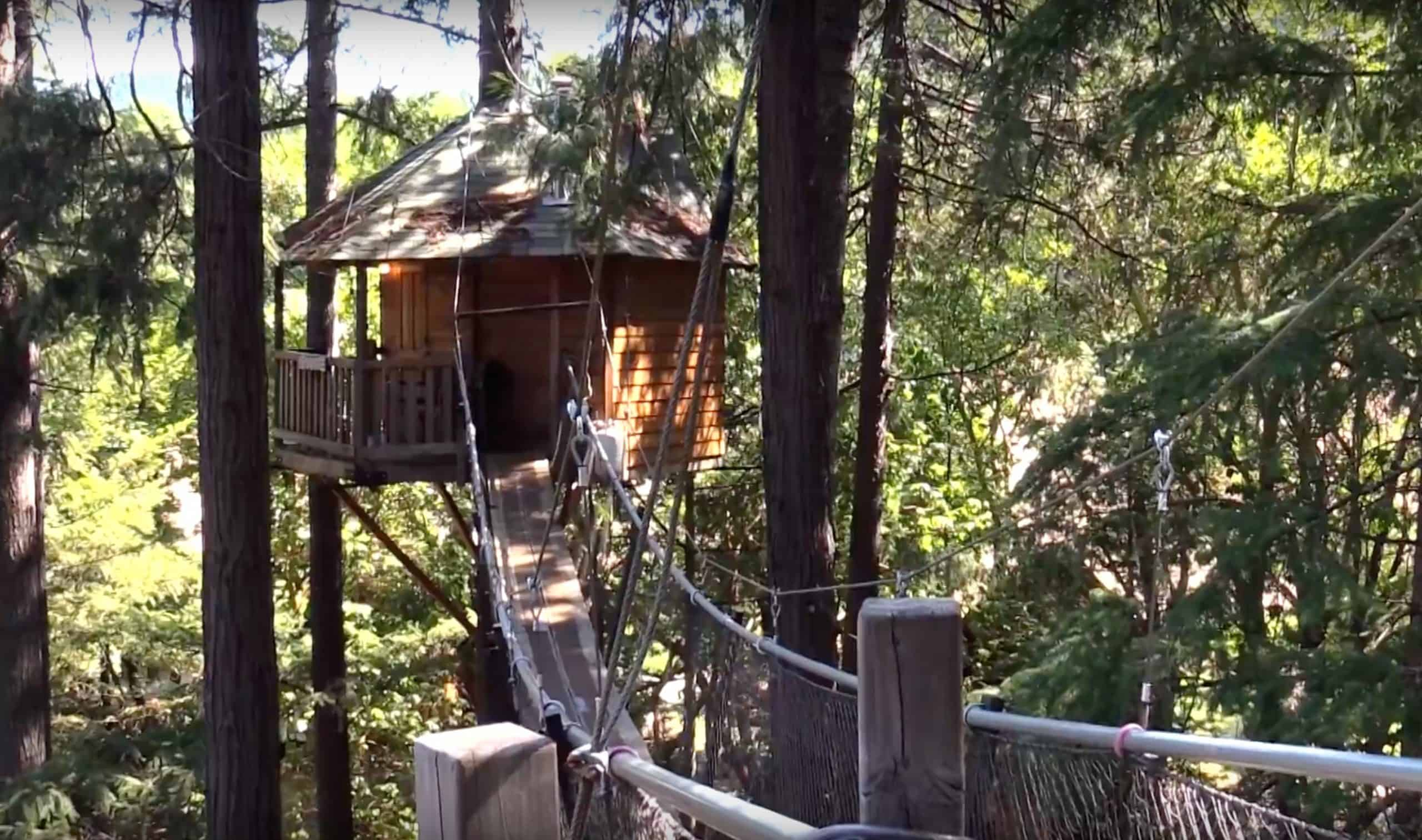 See The Tree Houses On The Coast